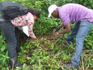 Israel Borokini and one other person bend over to harvest some samples of greenery on the ground