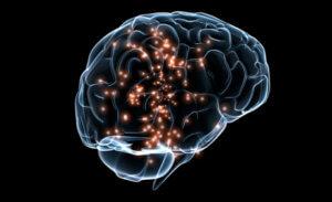 Neuroscience, Brain & Mind